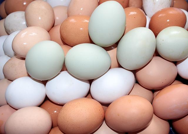 egg-1240747_640