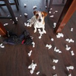Canine-proofing Your Home