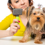 caring hostess holds a brush for pet brushing wool