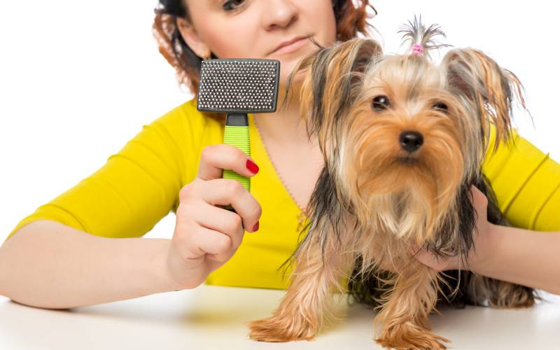 How to Brush & Groom Your Puppy | Puppy Care