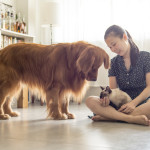 How to Vanish Dog Odors At Home