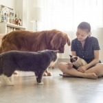 7-steps-for-grooming-your-pet-at-home