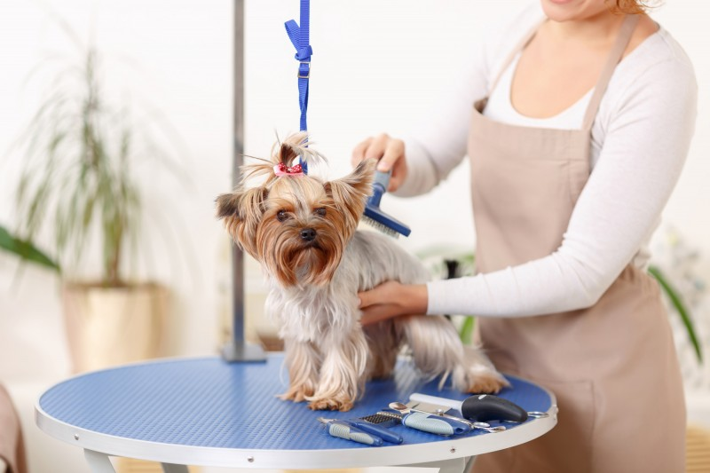 *7 Steps for Grooming Your Pet at Home*