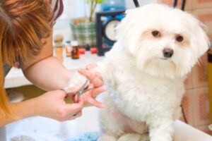 steps for grooming your pet